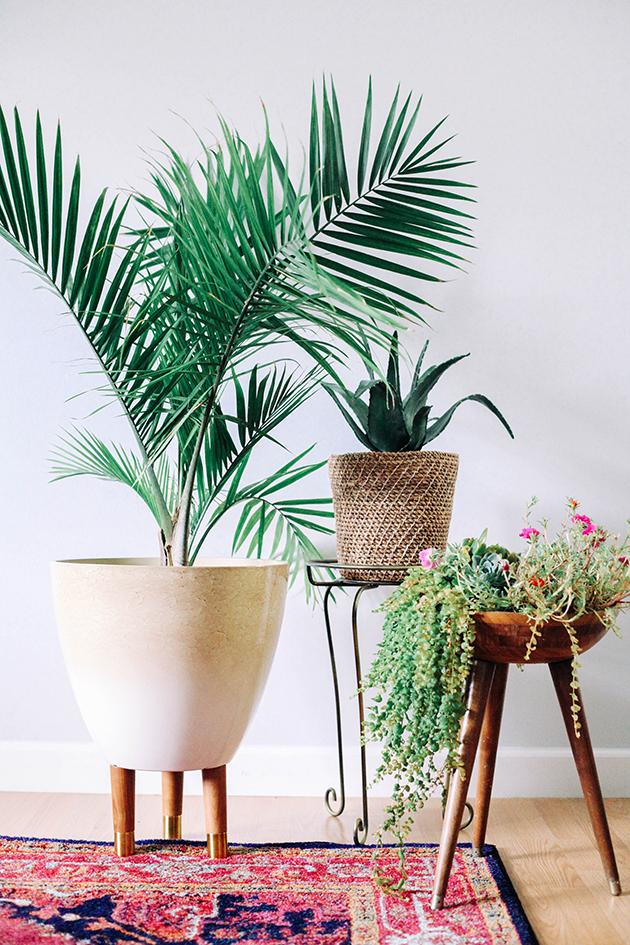Бамбук и бели интериорни бои