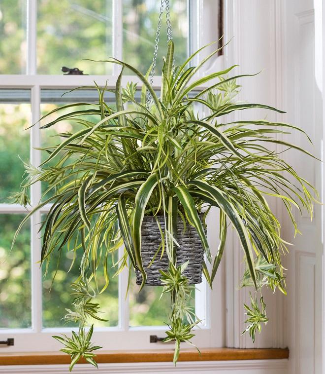 Интериорни бои и растения