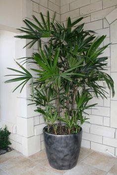 Интериорните бои и растенията