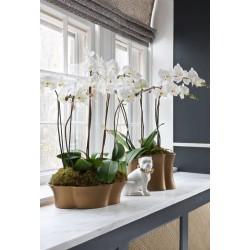 Кои са растенията за пречистване на въздух, от които вашият дом се нуждае?  /част 2/
