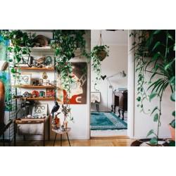 Кои са растенията за пречистване на въздух, от които вашият дом се нуждае?